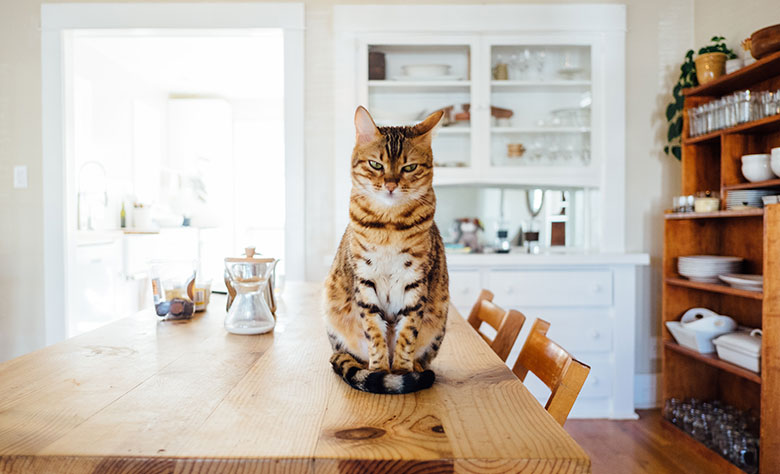 Pet-Friendly Home Remodeling Ideas