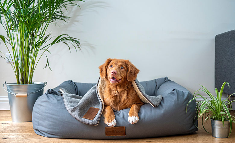 Essential Pet-Friendly Home Improvement Ideas